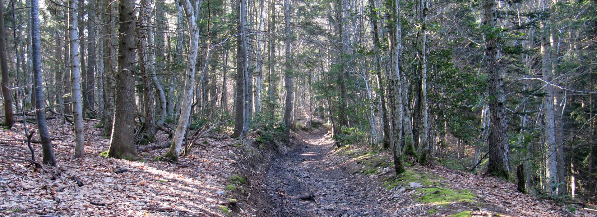 Recherche - Trouver votre randonnée