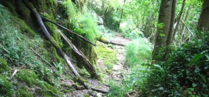 Gorges du Guiers Vif - En boucle depuis le Châtelard