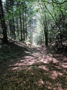 Le Pinet - Les sangles de Fouda Blanc et du Pinet, le pas de Fouda Blanc, la Grotte à l'échelle - 1867 M