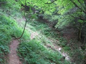 La Pinea - Depuis la route de la Charmette, par le sentier Vermorel - 1771 M