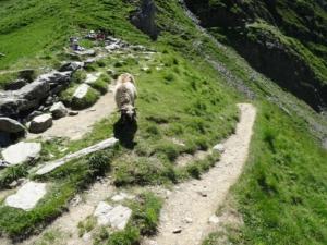 Grande Traversée des Alpes - Etape 6 - Les Houches - Chalets de Miage