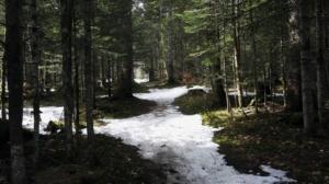 La Pointe du Frou - Depuis le foyer de ski de la Ruchère - 1163 M