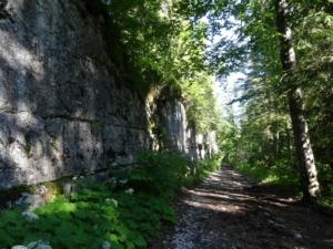 Grande Traversée du Jura - Étape 7 - Foret du Risoux - Mouthe